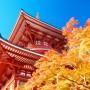 the autumn leaves at Naritasan