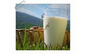 Halal Milk at Nakahora Farm