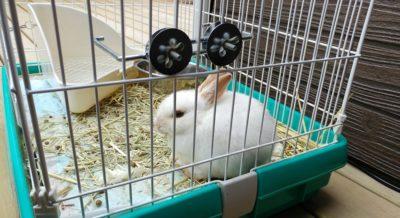 外のテラスではウサギが飼われています