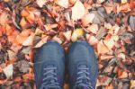 s_welcome-autumn-1 (1)